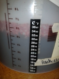 Fermenting bucket black berry wine
