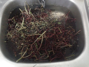 Elderberry washing foraged fruit Somerset