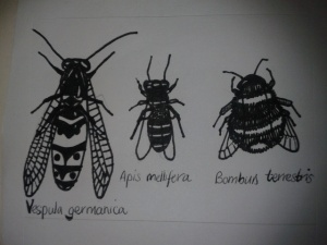wasp bumble bee honey bee sketch differences between