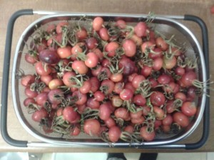 rosehips for wine making
