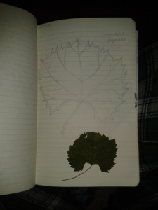 Grape leave drawing sketching
