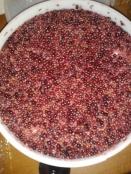 Apple eldeerberry wine fermentation in progress home brewing