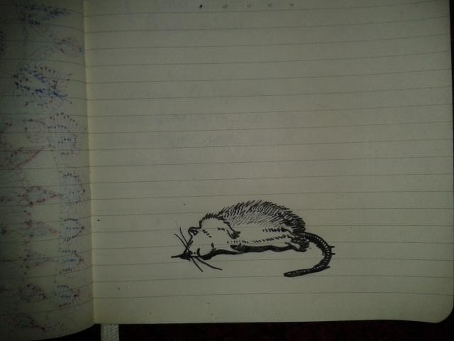 vanitas sketch rattus art project moleskine memento mori