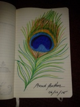 felt tip pen adrawingaday sketch peacock feather