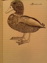 ink duck drawing adrawingaday sketch project