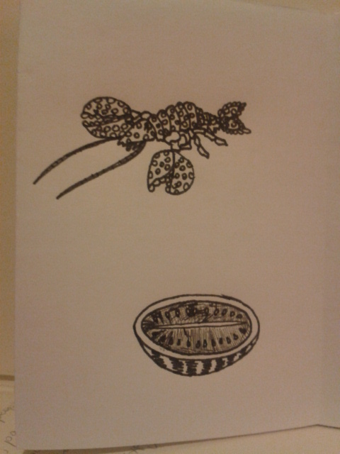kellymarietheartist ink melon lobster sketching zine