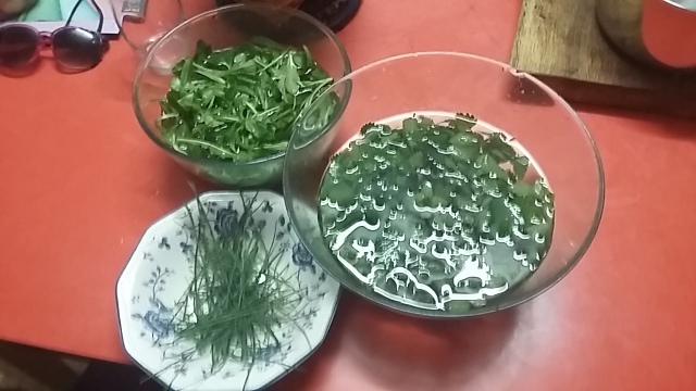 FORAGING Basque Country, chives, nettles, dandelions, lambs lettuce