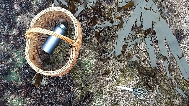 Scissors wicker basket seaweed forager travelling