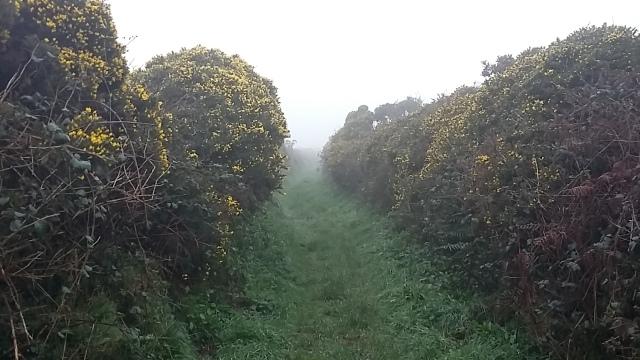 Boscawen-un photography gorse hedgerows