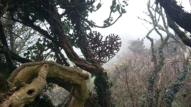 Stone circles witch trees Druid craft moors Cornwall visit
