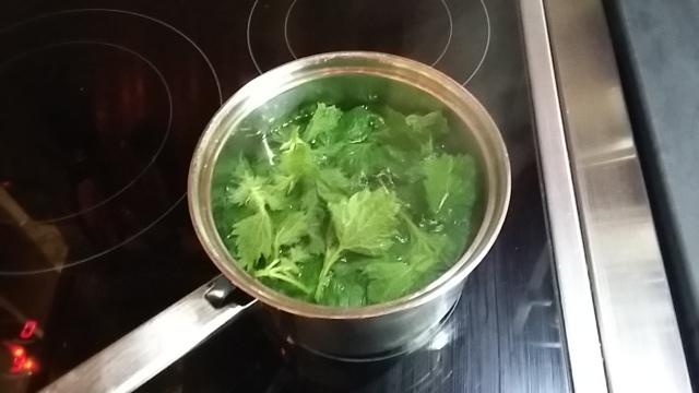 Brewing nettle leaves for tea