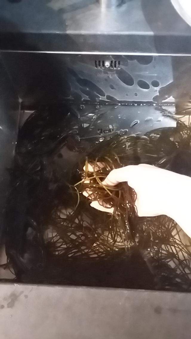 Foraging sea spaghetti seaweed Cornwall cookery