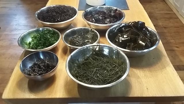 Foraging sea weed cookery school uk Cornwall