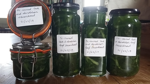 Eating locally foraging wild garlic bottling spring flavours