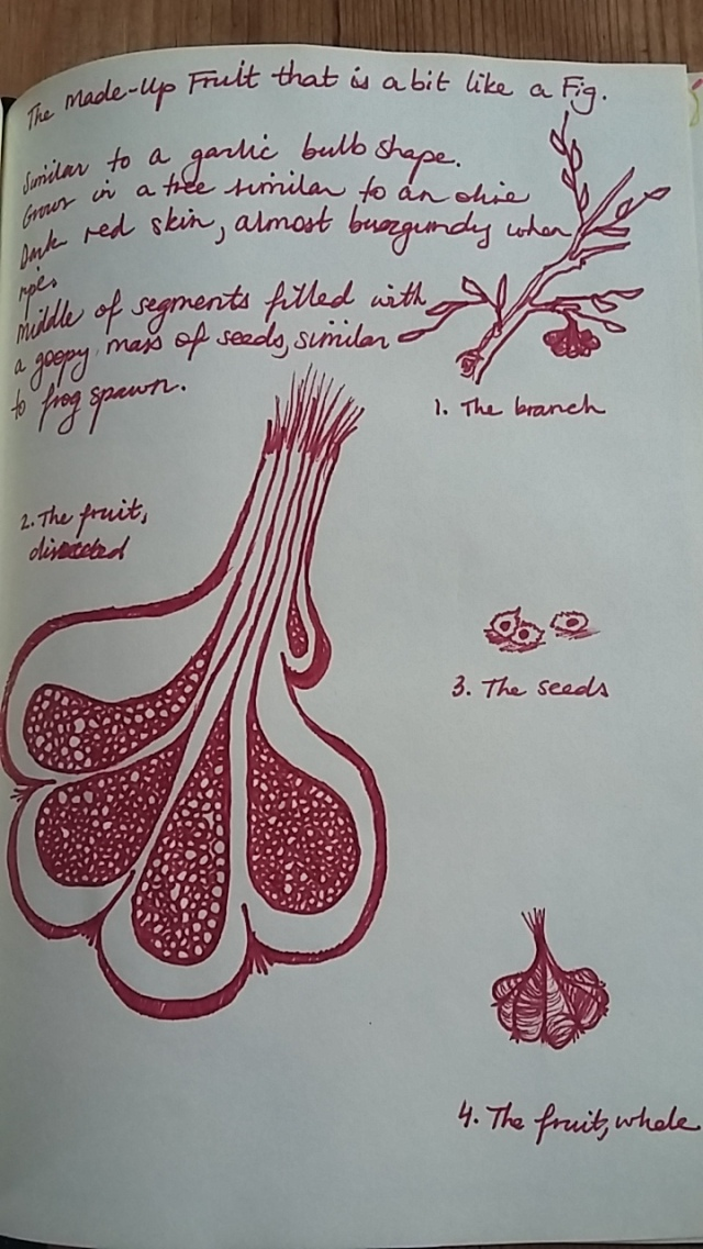 red ink botanical sketch voynich manuscript
