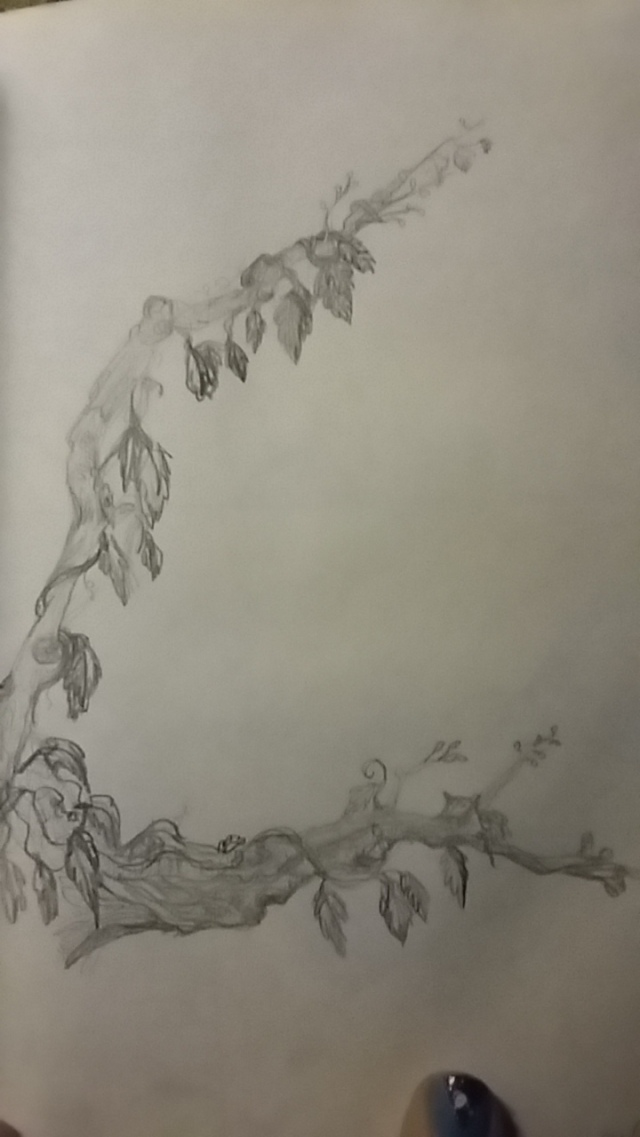 pencil sketch dead branch blossoming vines with leaves